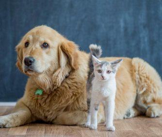 Melhores brinquedos para cães e gatos