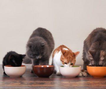 Melhores marcas de ração para gato