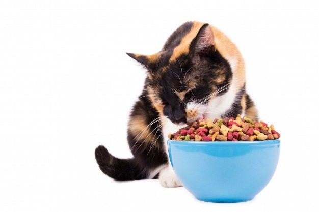 Ração para Gatos Betim