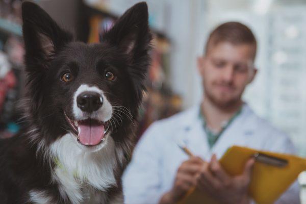Meu cachorro está com diarreia: o que faço?