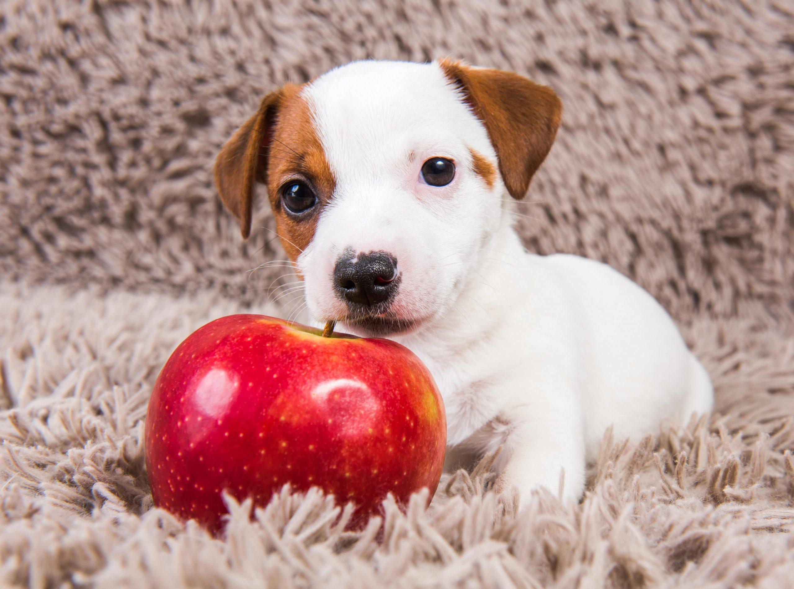Quais frutas cachorros podem comer? Descubra 9 aqui