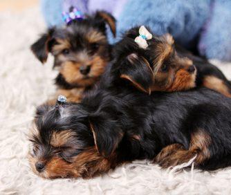 Nomes para cachorros: +100 ideias criativas para o seu pet!